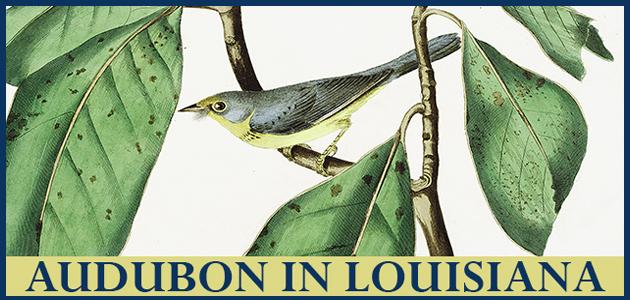 announcement of digital exhibition featuring bird art by Audubon